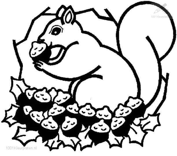 1001 Kleurplaten Dieren Eekhoorn Kleurplaat Eekhoorn