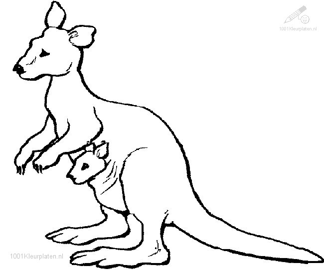 Kleurplaat Kangaroo met kleintje