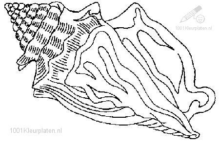 Kleurplaten Van Een Zee.1001 Kleurplaten Dieren Schelpen Kleurplaat Zee Schelp