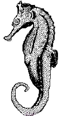 Kleurplaat Zeepaardje